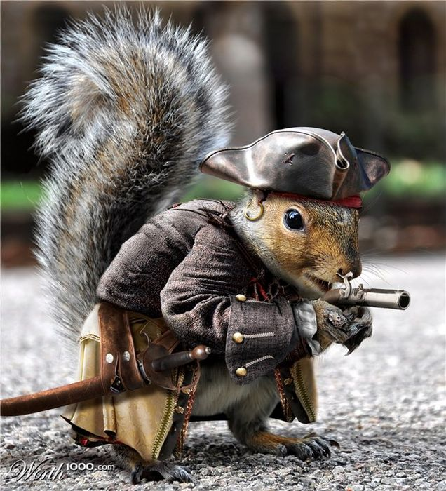 pirate-squirrel